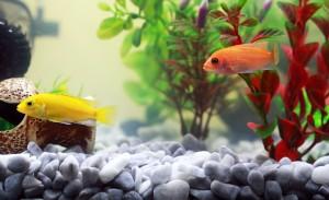 aquariums for children