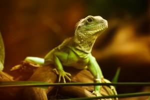 Green Lizard Life